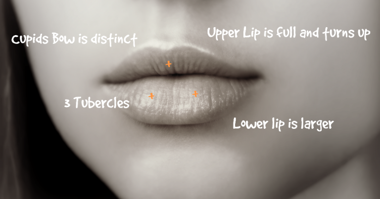 cosmetic lip anatomy